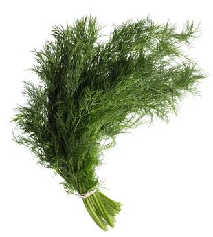 Dill herbs