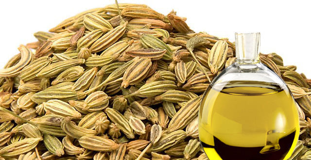 Fennel Oil‏
