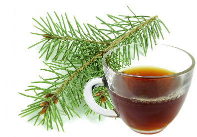 The health benefits of pine needle tea health benefits