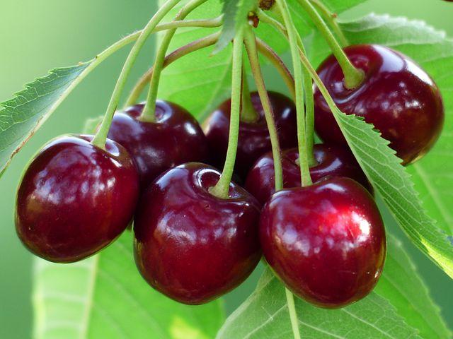 cherry-167341__480