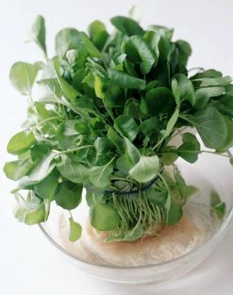 Green-Cress