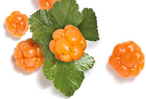 Cloudberry plant