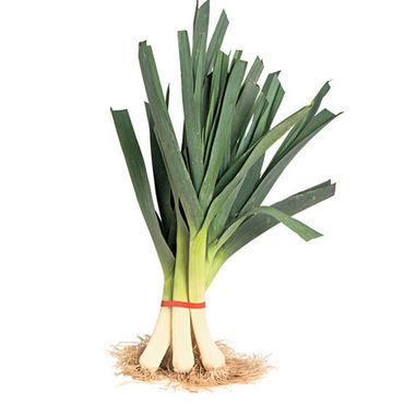 leeks plant