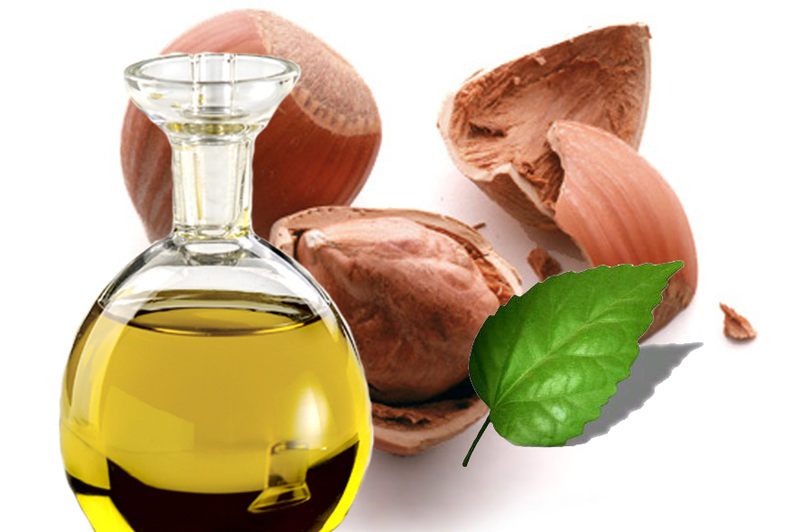 The Health Benefits Of Hazel Nut Oil Health Benefits