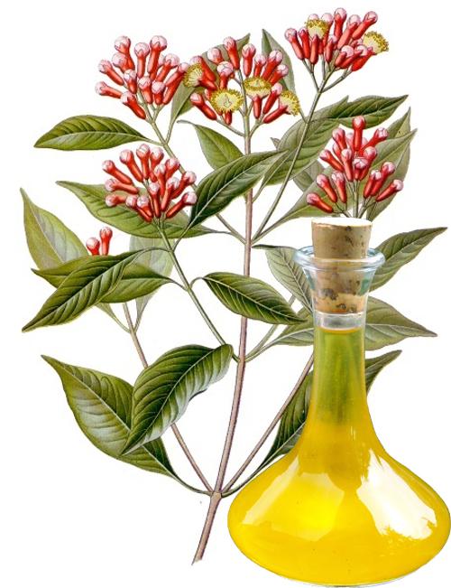 Clove Oil