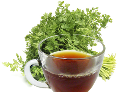Chervil Tea