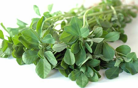 Fenugreek Herb