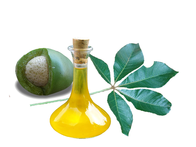 Mongongo Nut Oil