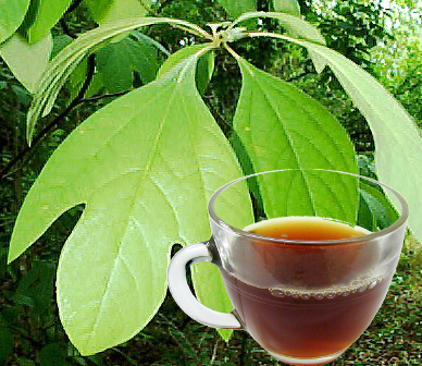 Sassafras Leaf Tea