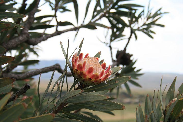 flower-176565__480