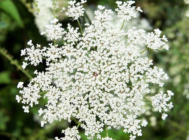 flower-18351__480