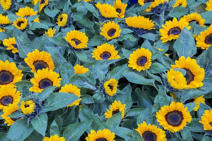 flower-3271165__480