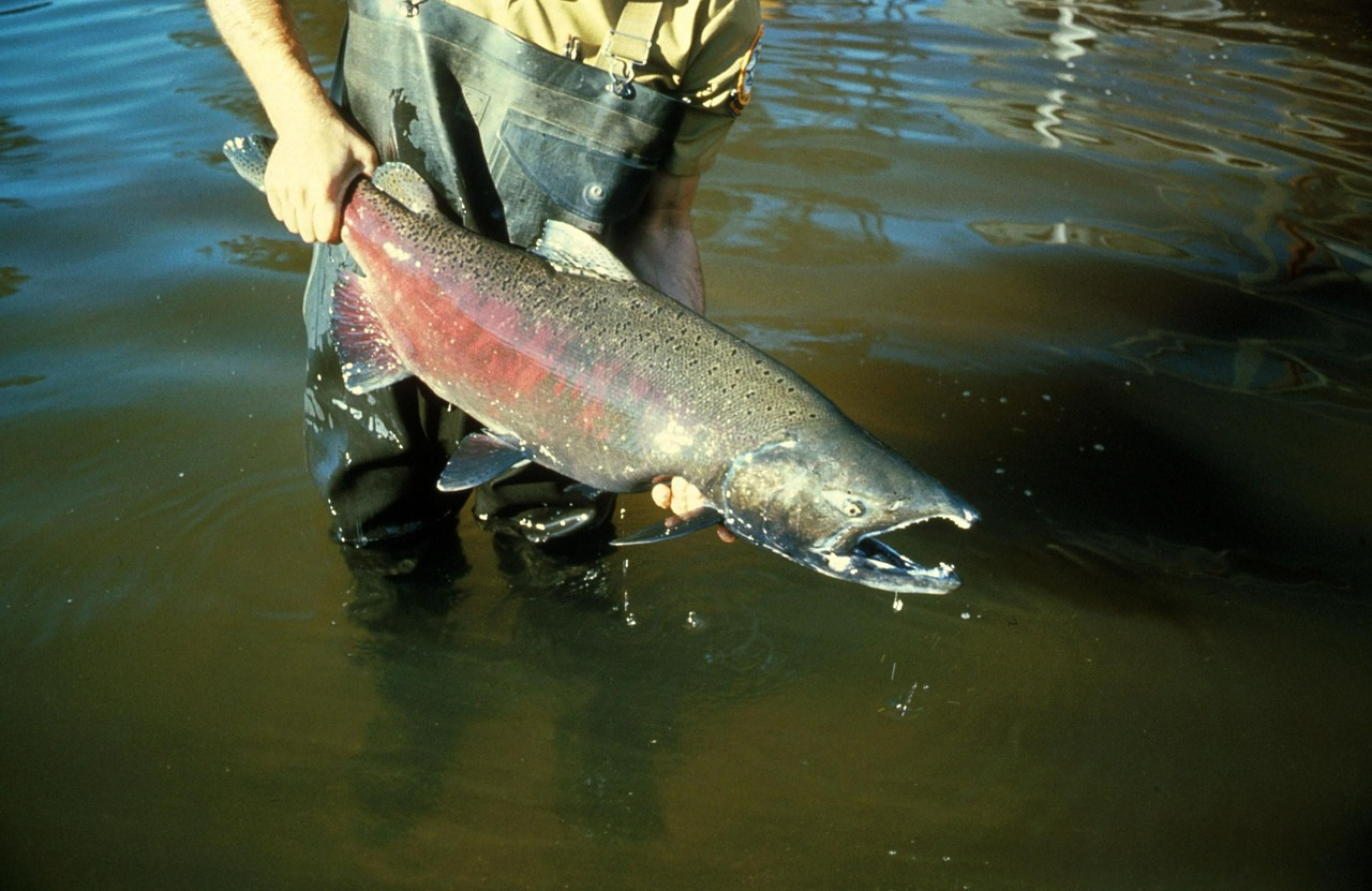 fish-386853_1280